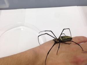 南国にいる大きなクモ